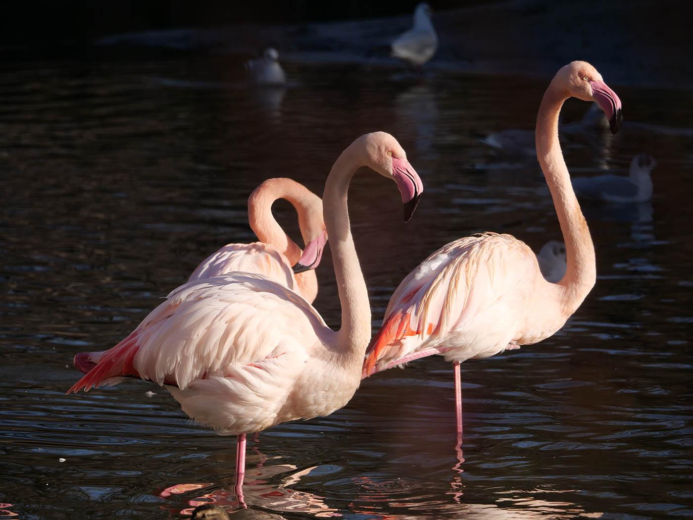 Photo d'animaux prises au Zoo avec l'objectif Panasonic Leica 100-400 mm