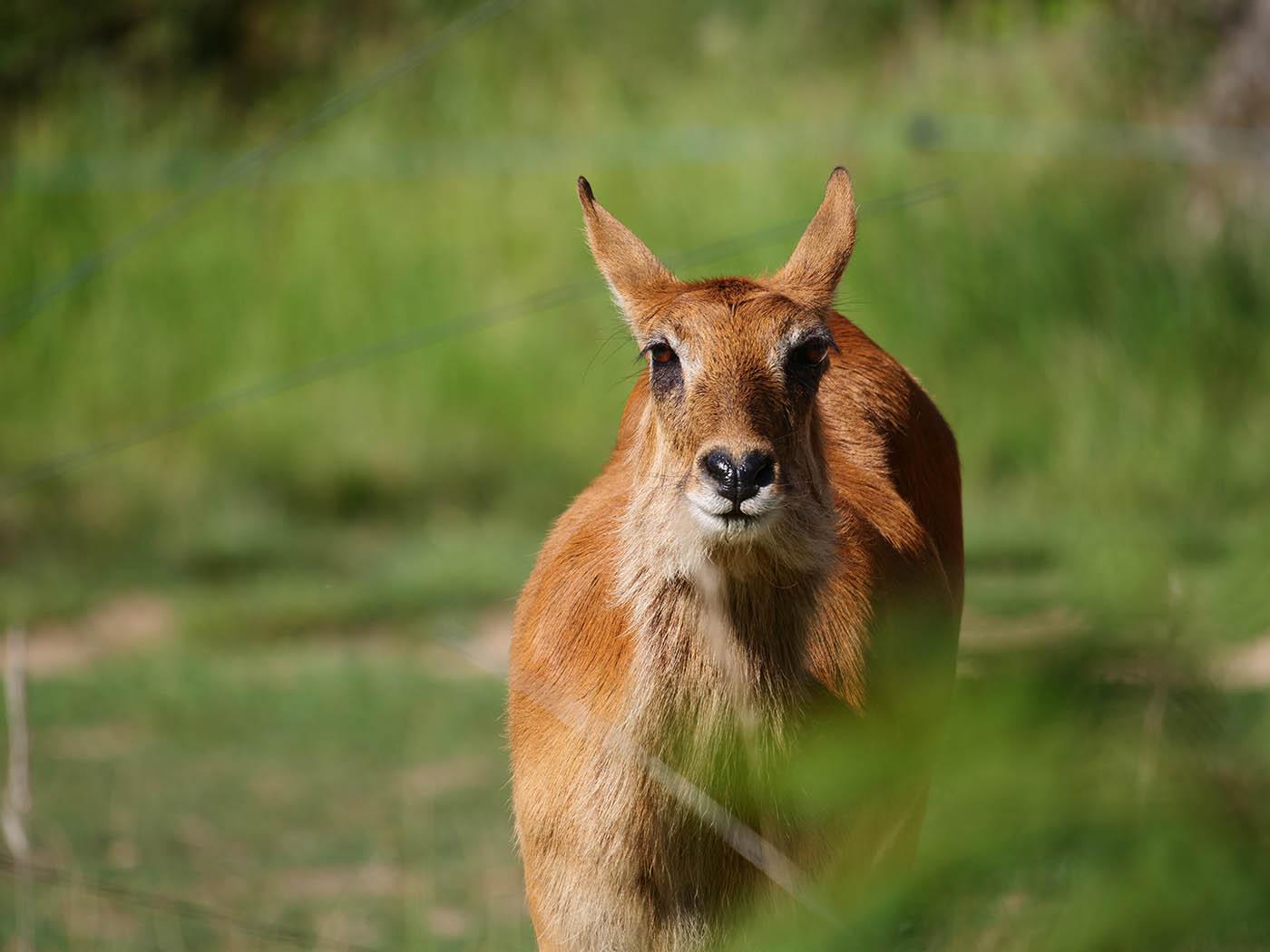 Photogra^hie d'animaux sauvages prise au zoo de Lyon avec le Panasonic Leica 100-400 mm