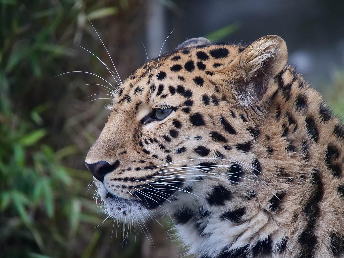 photo animalière prise avec objectif Olympus 12-200 mm