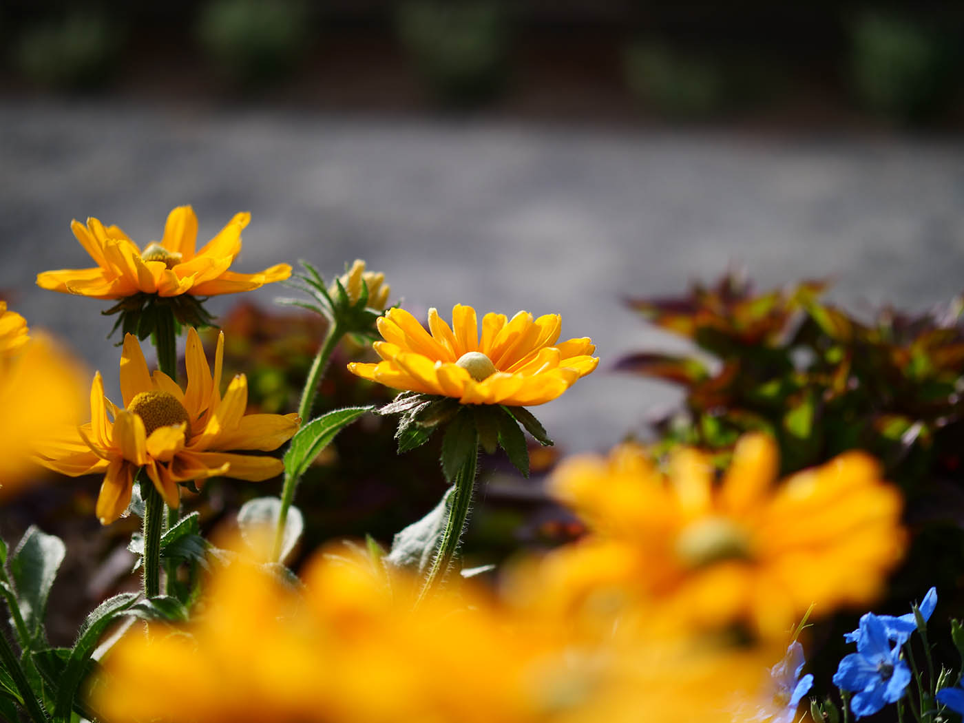 photo de fleur et profondeur de champ