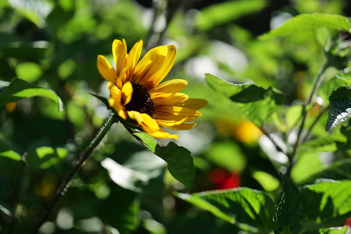 macro fleur Panasonic Lumix S1 avis
