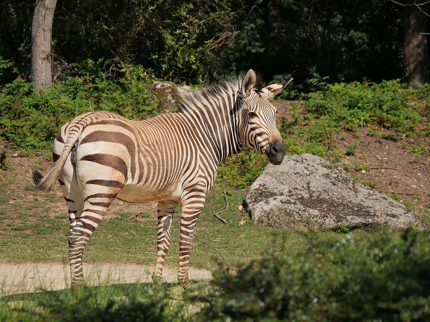 photo animalier avec Olympus 12-100 mm
