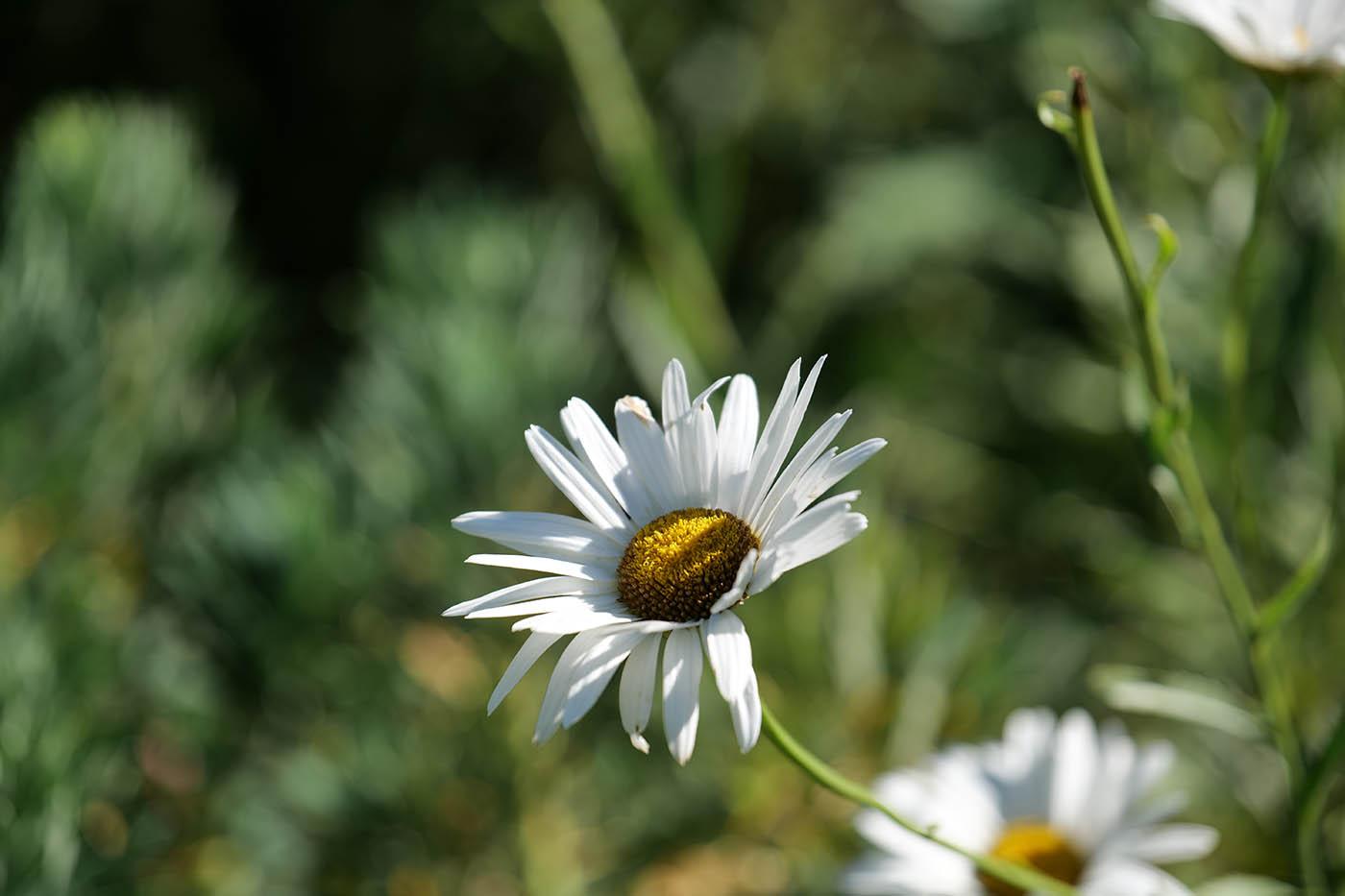photo fleur test hybride plein format monture L