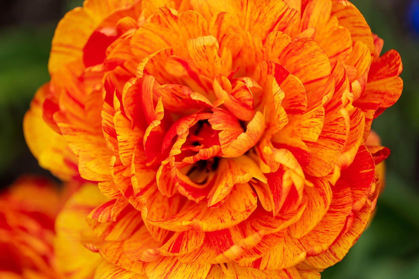macro de fleur prise avec appareil photo hybride plein format